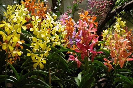 Changi_2006-07-2995