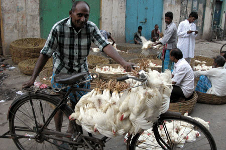 Chickens on bicycle