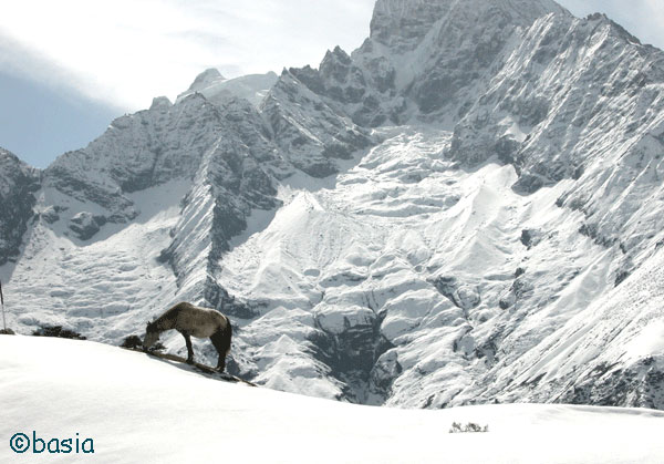 Horse in the Himalayas