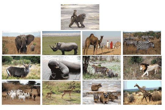 2008 Best of India Ink Animal Calendar