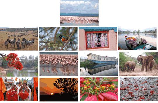 2008 Best of India Ink Calendar